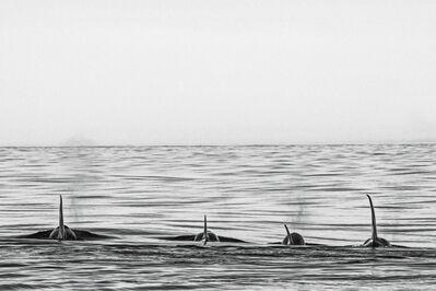 Cristina Mittermeier, 'Offshore'