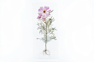 Azuma Makoto, 'Block Flower Two, Cosmos Cav. ', 2018
