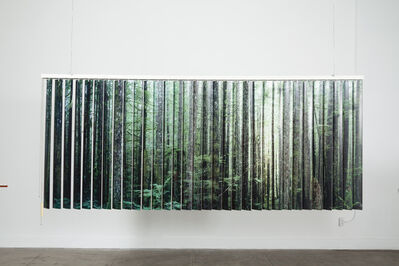 Tanya Brodsky, 'A wide and view of a dense forest in British Colombia/ Carne mistakes assortita ', 2019