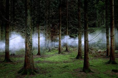 Ellie Davies, 'Between the Trees 1', 2014
