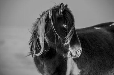 A Yin, 'Spirit of Mongolian Horses #19', 2015