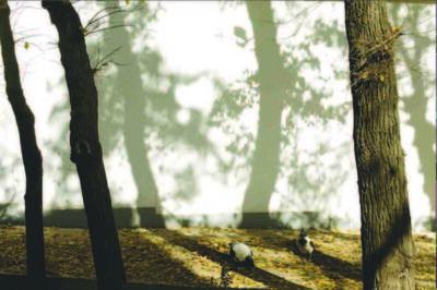 Abbas Kiarostami, 'Trees & Crows 54', 2007