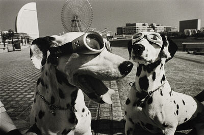 Elliott Erwitt, 'Yokohama, Japan (2 dogs in goggles)', 2003