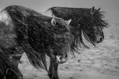 A Yin, 'Spirit of Mongolian Horses #24', 2015