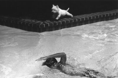 Paul Greenberg, 'Swimmer & White Dog', ca. 1982