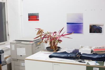 Wolfgang Tillmans, 'Plant life, c', 2013