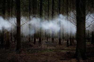 Ellie Davies, 'Between the Trees 6', 2014