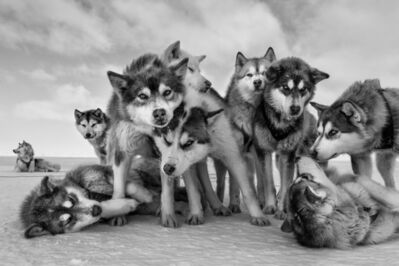 Paul Nicklen, 'Husky Huddle', 2015