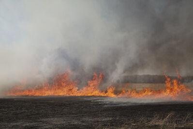 Barbara Diener, 'Fire', 2012