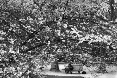 Edouard Boubat, 'Les Amoureux de Paris II', 1982