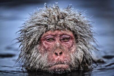 David Yarrow, 'Grumpy Monkey', ca. 2013