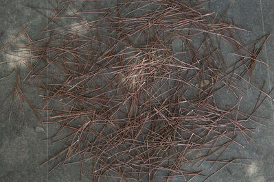 Caline Aoun, 'Pine needles', 2015
