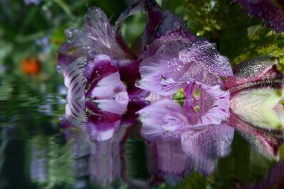 Andrea Bonfils, 'Submerged Gardens # 2508', ca. 2018