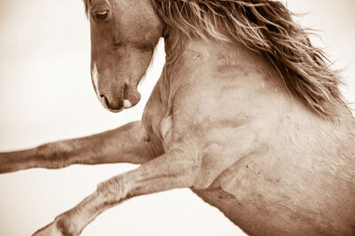 LISA CUEMAN, 'Born Wild - Wild Horses of the Outer Banks', 2012