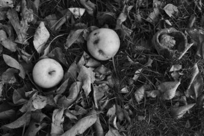 Kay Canavino, 'Aging Apples', 2013