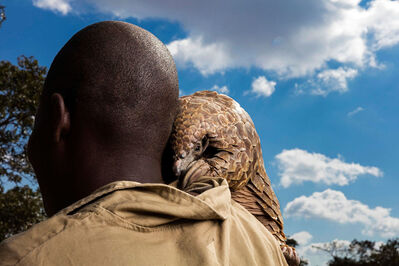 Brent Stirton, 'Trafficked Pangolin and caregiver', 2018