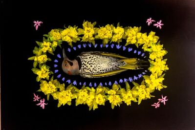 Portia Munson, 'Northern Flicker', 2013
