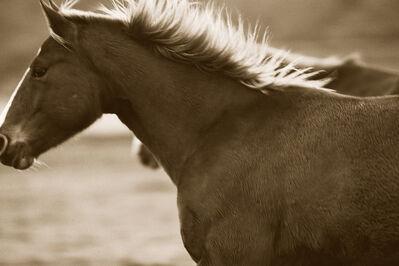 Jules Frazier, 'Bland Horse', 2011
