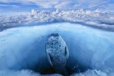 Paul Nicklen, 'Nature's Window', 2006
