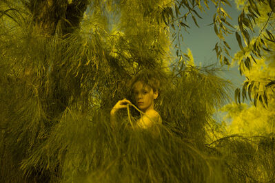 Itamar Freed, 'Girl in Pine', 2015