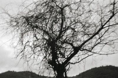 Lee Gap-chul, 'Damyang', 2005