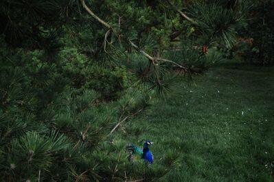 Shen Wei 沈玮, 'Peacock', 2014