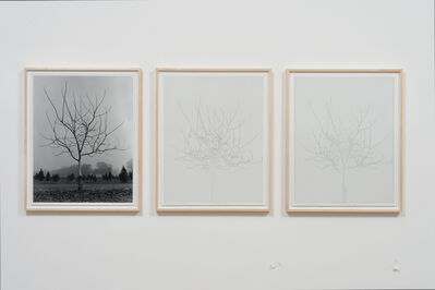 Charles Gaines, 'Walnut Tree Orchard, Set 4 (version 2) ', 1975-2014