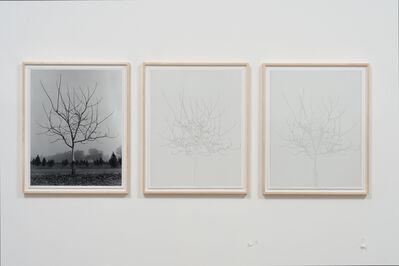 Charles Gaines, 'Walnut Tree Orchard, Set 4 (version 2) ', 1975-2014