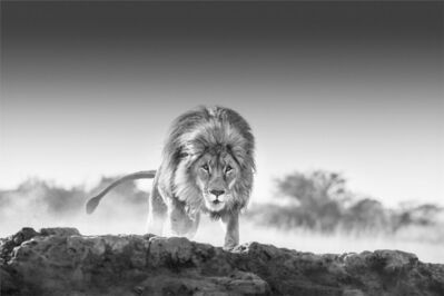 David Yarrow, 'Relentless', 2019