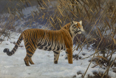 Hugo Ungewitter, 'A TIGER PROWLING IN THE SNOW', 1912