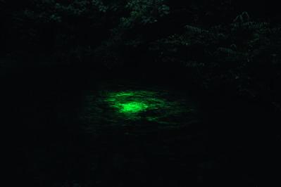 Robert Zhao Renhui, '[plate 37] Glow in the dark Fish at Sunset', 2013