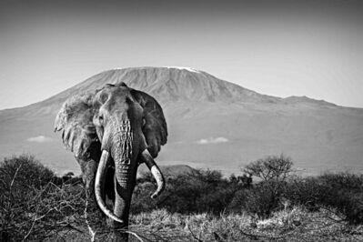 Michel Ghatan, 'Elephant and Kilimanjaro', Tawi, Kenya, 2020
