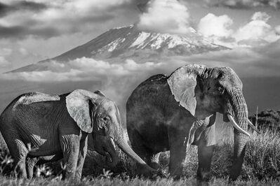 David Yarrow, 'Kilimanjaro ', 2014