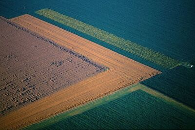 Georg Gerster, 'Harvesting Rape, Hungary', 2009