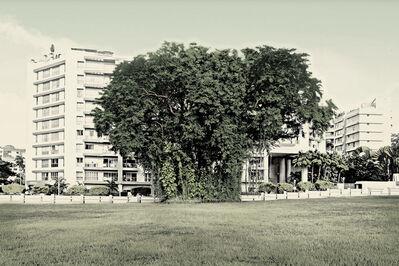 Robert Zhao Renhui, 'Angsana Tree, Hindhede Road', 2015