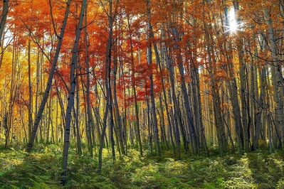Peter Lik, 'Autumn Splendor', 2012