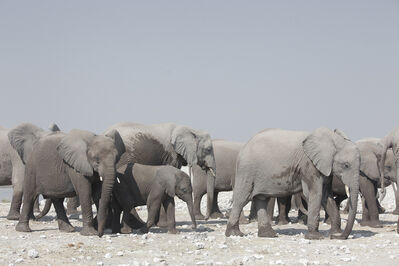 Maroesjka Lavigne, 'Elephants, Namibia', 2015