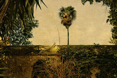 Albarrán Cabrera, 'The Mouth of Krishna, #159', 2013