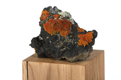 herman de vries, 'die steine (detail)', 2009
