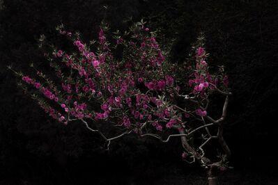 Shen Wei 沈玮, 'Peach Tree', 2014