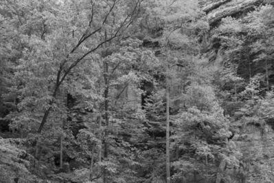 Jordan Tate, 'Untitled #14 (Daniel Boone Forest)', 2019