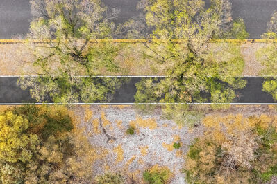 """Zoe Wetherall, '""""Autumn Trees"""" Contemporary Abstract Aerial Landscape (Color Photograph)', ca. 2019"""