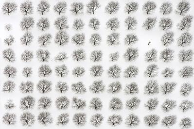 John Griebsch, 'Orchard Quilt', 2015