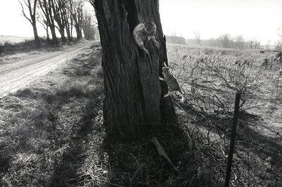 Larry Towell, 'Black Locust Tree, Lambton, Ontario, Canada', 1990