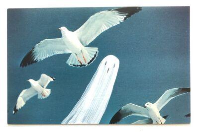 Emily Pettigrew, 'Ghostcard: Seagulls', 2020