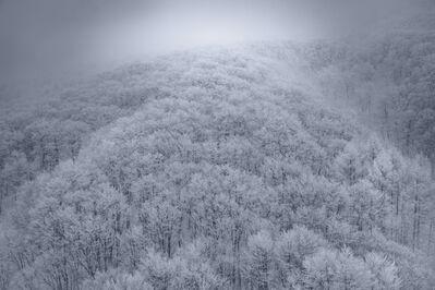 Tom Jacobi, 'Fairy Forest I, Japan', 2016