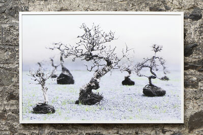 Su-Mei Tse 謝素梅, 'Trees and Roots II (in collaboraton with Jean-Lou Majerus)', 2010