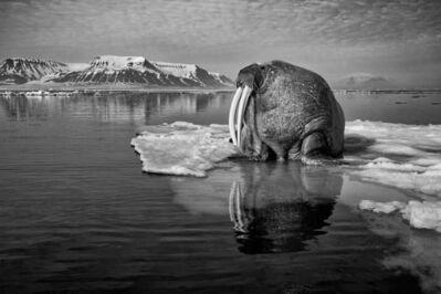 Paul Nicklen, 'Solitude (Walrus)', ca. 2020