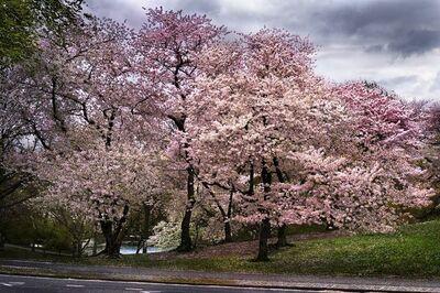 David Drebin, 'Pink Parkway', 2013
