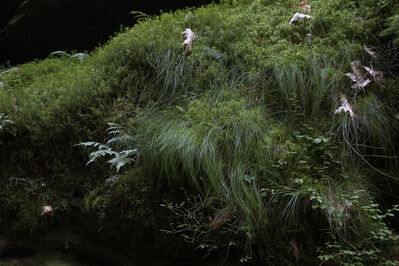 Chih-Chien Wang, 'Hairy Grass', 2020
